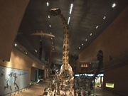 image Kitakyushu Museum of Natural History and Human His